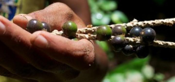 holding acai berry 2