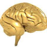 Brain supplements 13